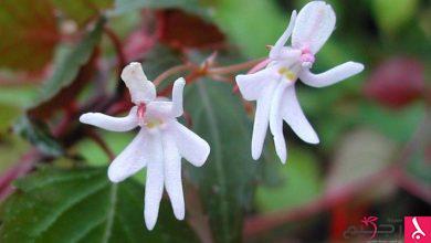 Photo of صور مذهلة لأزهار تشبه كائنات اخرى