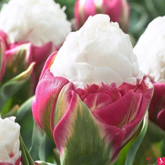 صور مذهلة لأزهار تشبه كائنات اخرى