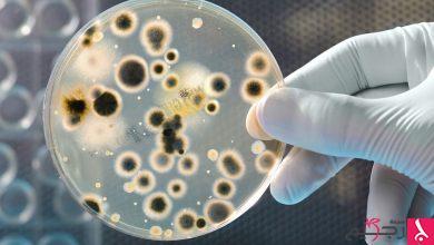 Photo of معلومات شائعة لكن خاطئة عن الجراثيم وتأثيرها على الصحة