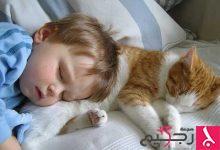 Photo of متلازمة موت الرضع قد يسببها وجود القطط بالمنزل