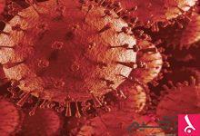 Photo of كيف تخدع الفيروسات الجهاز المناعي؟