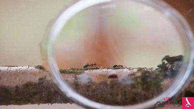 Photo of النّمل يرشد العلماء إلى دواء فعال!