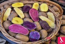 Photo of البطاطا غذاء متكامل!