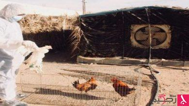 Photo of إصابة بإنفلونزا الطيور بوادي الدواسر