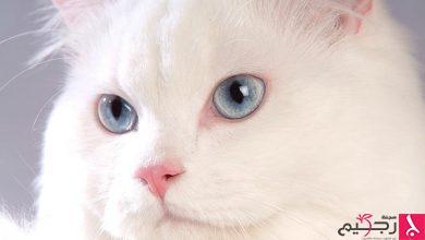 Photo of اجمل صور قطط من حول العالم