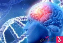 Photo of الدماغ يتوقف عن إنتاج خلايا الذاكرة من سن 13 عاماً