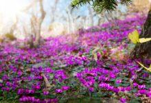 Photo of فوائد فصل الربيع من الناحية النفسية والصحية
