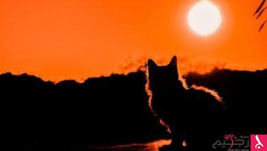 Photo of ما تفسير رؤية القطط في المنام؟