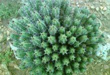 Photo of عشبة الدغموس: تعرف على فوائد هذه النبتة وعسلها وطريقة تحضيرها!