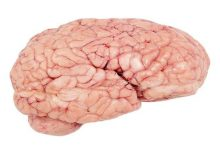 "Photo of عادات ""قاتلة"" تدمر خلايا الدماغ"