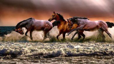 Photo of ما تفسير الحلم بالخيول في المنام؟