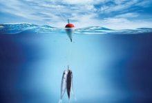 Photo of ما تفسير صيد السمك في المنام؟