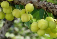 Photo of 7 أنواع غريبة من الفواكه لها فوائد صحية مذهلة!