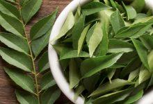 Photo of فوائد شجرة النيم للشعر والبشرة