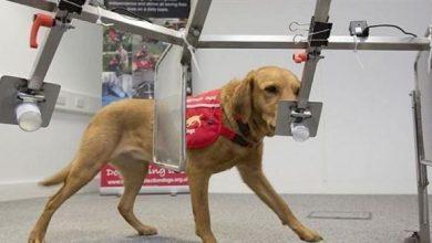 Photo of ابتكار كلب إلكتروني لإنقاذ الضحايا تحت الأنقاض