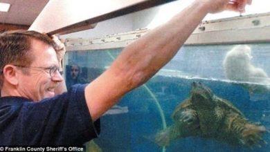 Photo of معلم يواجه السجن لإطعامه جرواً لسلحفاة أمام تلاميذه