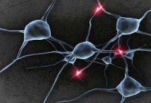 Photo of علماء يحولون الدم إلى خلايا عصبية!
