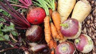 Photo of كيف تخزن الخضروات الجذرية في المطبخ؟