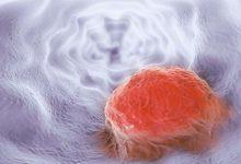 Photo of علماء: الماريغوانا قد تحارب السرطان