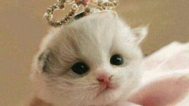 Photo of صور قطط , صور النستقرام قطط جميلة