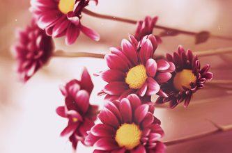 Photo of رمزيات زهور ناعمة , صور زهور جميلة للواتس , خلفيات ورد ناعم