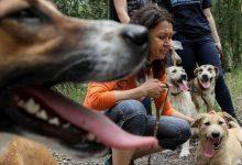 Photo of بسبب لعقة كلب.. رجل يفقد أطرافه الأربعة