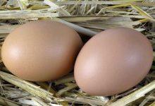 Photo of ماذا يحدث إذا تناول الإنسان البيض يوميا؟