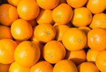 Photo of فوائد اكل البرتقال قبل النوم