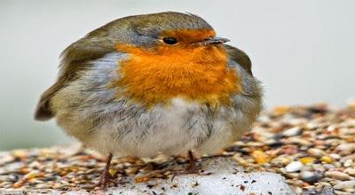 التشحيم عند الطيور اسبابه وعلاجه