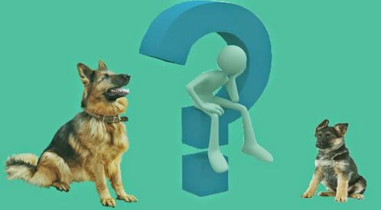 الفرق بين الجرو والكلب في التربية