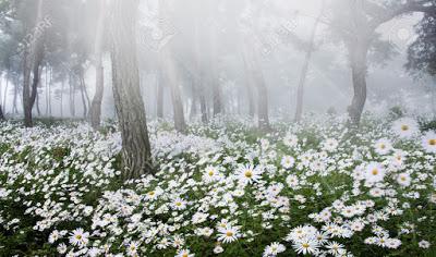 الربيع في غابات سيبيريا