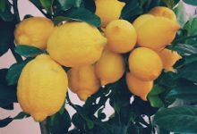 Photo of فوائد الليمون على الريق