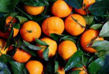 Photo of ما هي فوائد البرتقال