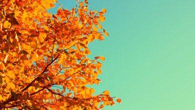 Photo of موضوع عن فصل الخريف للاطفال , مقدمة جميلة عن الخريف , كلمة وصف الخريف