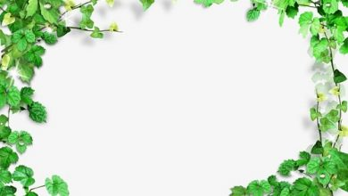 Photo of صور براويز خضراء , اطارات خضراء مفرغة للكتابة , صور بطاقات اخضر