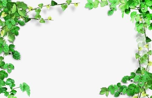 - Marcos para plantas ...