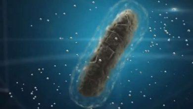 Photo of ابتكار نانو جل لعلاج جميع الأمراض الفيروسية