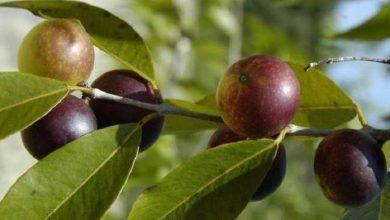 Photo of فاكهة مثالية لحرق الدهون وتخفيض الوزن!