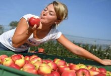 Photo of قشور التفاح قادرة على محاربة أخطر أمراض العصر