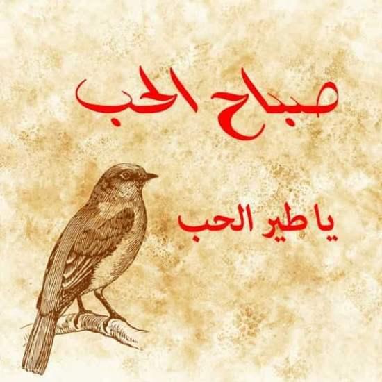 صورة صباح الحب يا طير الحب