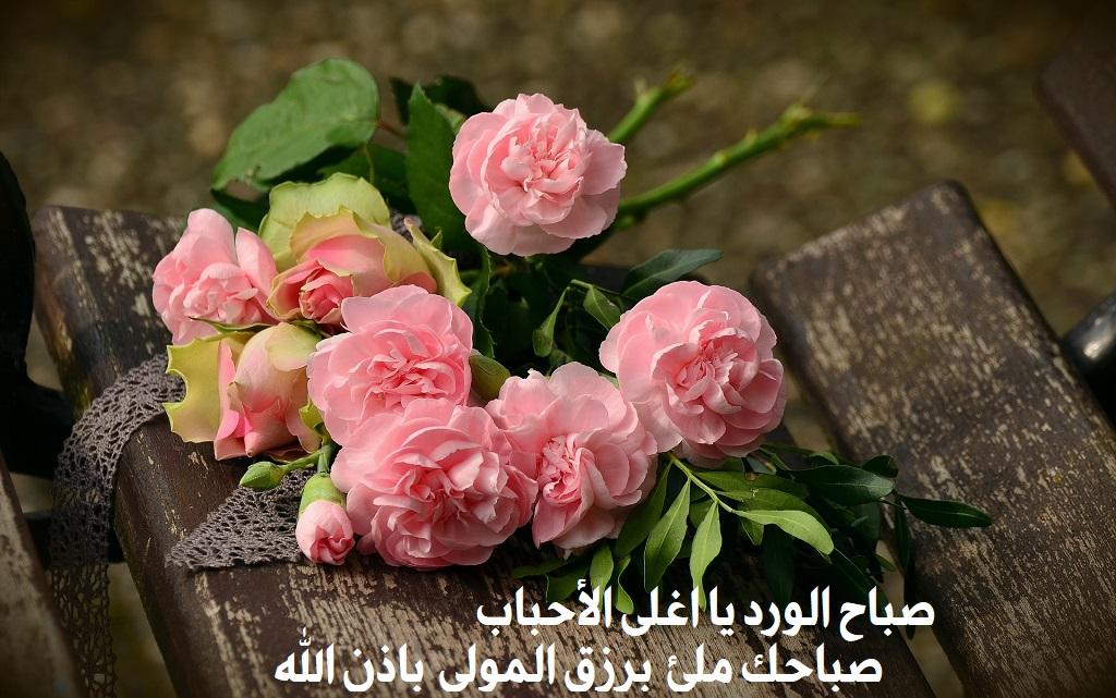 صباح الورد يا اغلى الأحباب صباحك ملئ برزق المولى باذن الله