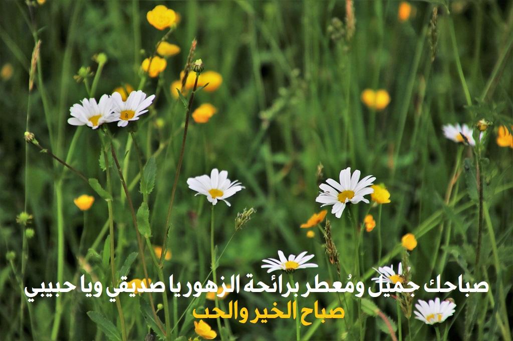 صباحك جميل معطر برائحة الزهور يا صديقي يا حبيبي صباح الخير والحب