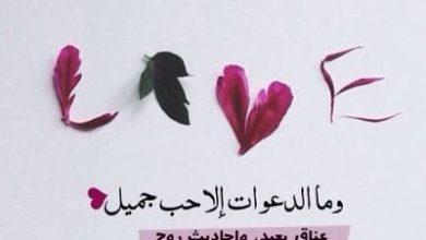 Photo of رسالة شكر لصديقتي , كلام لصديقتي قصير