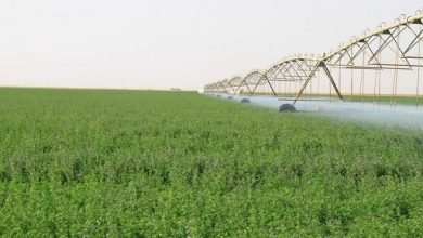 """Photo of البيئة"""": قرار إيقاف زراعة الأعلاف الخضراء يدخل حيز التنفيذ بعد 5 أيام"""