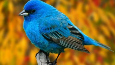 Photo of خلفيات عصافير , صور عصفور للتصميم , اجمل طيور ملونة , رمزيات طيور