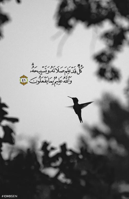 صور اسلامية مكتوب عليها آيات من القرآن حلوة