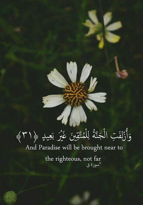 صور مكتوب عليها آيات من القرآن للأنستجرام