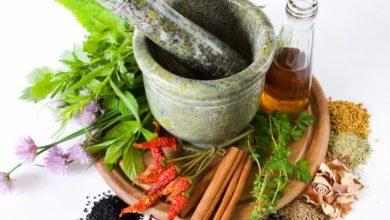 Photo of البرسيم الحجازي – الفصة – الفصفصة – alfalfa – medicago sativa