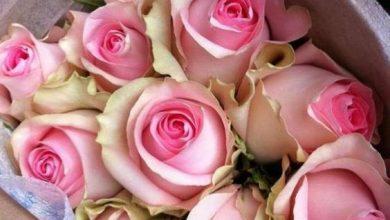 Photo of احلى صور ورود جوده عالية , صور زهور منوعة , اجمل صور ورد ملونة