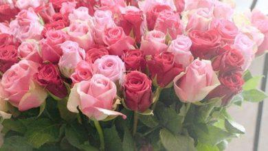 Photo of اجمل صور ورد حلو رومانسية , صور ورد بدون كتابة